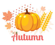 Autumn pumpkin Royalty Free Stock Images