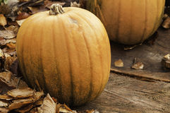 Autumn Pumpkin. Shot of a pumpkin surrounded by fallen leaves depicting an Autumn/Halloween scene Royalty Free Stock Photos