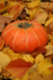 Autumn pumpkin Royalty Free Stock Photos