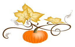 Autumn Pumpkin. Autumn orange pumpkin with dry leaves. Illustration on white background. Jpeg with clipping path vector illustration