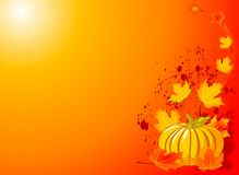 Autumn Pumpkin Background Royalty Free Stock Photography