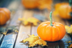 Autumn pumpkin background Royalty Free Stock Images