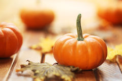 Autumn pumpkin background Royalty Free Stock Photo