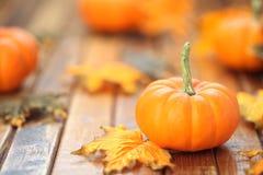 Autumn pumpkin background Stock Photos