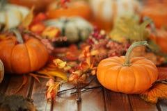 Autumn pumpkin background Royalty Free Stock Photography