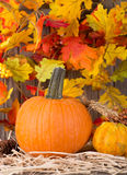 Autumn Pumpkin Closeup Royalty Free Stock Image
