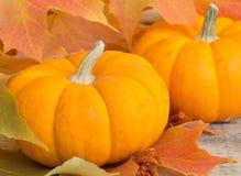 Autumn Pumpkin Closeup Royalty Free Stock Photo
