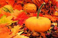 Autumn pumpkin Stock Image