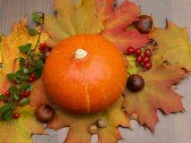 Autumn Pumpkin. Pumpkin and autumn colors composation Royalty Free Stock Image