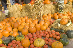 Autumn pumpkin decoration. Some of fresh and beautiful different colored pumpkins on helloween in a large row on a market Stock Photography