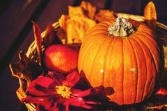 Autumn pumpkin. Autumn decoration with pumpkin and dahlia Stock Photos