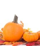 Autumn Pumpkin Decoration Stock Images