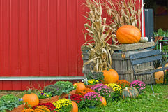 Autumn pumpkin display Stock Photo