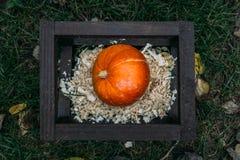 Autumn Pumpkin in einem hölzernen Quadrat auf Sägemehl Stockfotografie