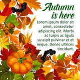 Autumn pumpkin and fall season leaf poster design Royalty Free Stock Photos