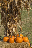 Autumn At The Pumpkin Farm Lizenzfreies Stockfoto