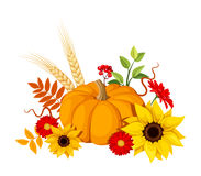 Autumn pumpkin and flowers. Vector illustration. Royalty Free Stock Photo