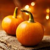Autumn Pumpkin Happy Thanksgiving Background med orange pumpki Fotografering för Bildbyråer