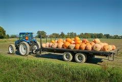 Autumn Pumpkin Harvest imagen de archivo libre de regalías