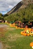 Autumn Pumpkin Harvest Stock Photography