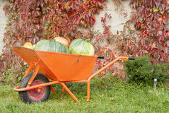 Autumn Pumpkin Harvest image stock