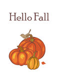 Autumn Pumpkin Harvest Photos stock