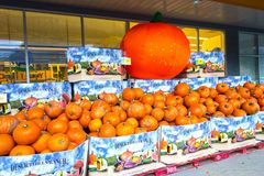 Autumn Pumpkin Harvest Sale in Canmore Aberta stock images