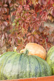 Autumn Pumpkin Harvest Stock Photos