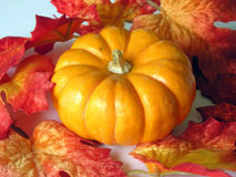 Autumn pumpkin and leaves. Colorful closeup of autumn leaves and a pumpkin royalty free stock image