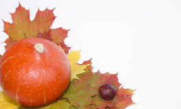 Autumn Pumpkin. Pumpkin and autumn leaves composation isolated Royalty Free Stock Images
