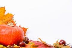 Autumn Pumpkin. Pumpkin and autumn leaves composation isolated Stock Photos