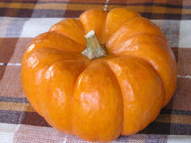 Autumn Pumpkin on plaid Royalty Free Stock Photos