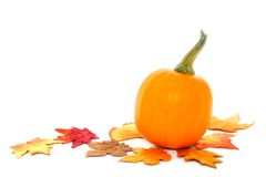 Autumn pumpkin Stock Images