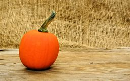 Autumn pumpkin Royalty Free Stock Photo