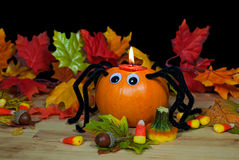 Autumn pumpkin spider Stock Photography
