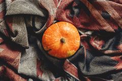 Autumn pumpkin on stylish scarf fabric flat lay, space for text. Happy halloween or thanksgiving top view. seasonal greetings, fall holidays. harvest time Royalty Free Stock Image