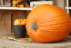 Autumn pumpkin on a table Royalty Free Stock Photo