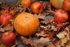 Autumn Pumpkin Thanksgiving Background - calabaza anaranjada y manzanas rojas sobre las hojas de la caída en la tabla gris Copie  Imagen de archivo libre de regalías