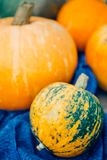 Autumn Pumpkin Thanksgiving Background - calabazas anaranjadas sobre el wo foto de archivo libre de regalías