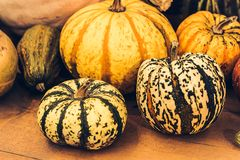 Autumn Pumpkin Thanksgiving Background - calabazas anaranjadas sobre fondo oxidado Pila de Halloween verrugoso foto de archivo