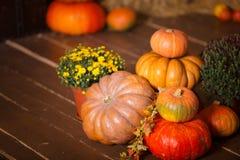 Autumn Pumpkin Thanksgiving Background - calabazas, hojas y flores anaranjadas sobre piso de madera Imagenes de archivo