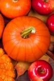 Autumn Pumpkin Thanksgiving Background con le zucche arancio, app Fotografie Stock Libere da Diritti