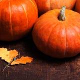 Autumn Pumpkin Thanksgiving Background concept  - orange pumpkin Royalty Free Stock Images