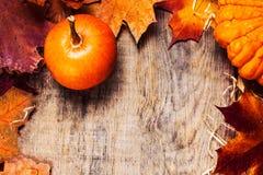 Autumn Pumpkin Thanksgiving Background Concept - orange pumpkins Royalty Free Stock Photos