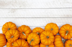 Autumn Pumpkin Thanksgiving Background. Autumn mini pumpkin thanksgiving background Stock Images
