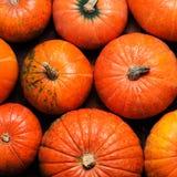 Autumn Pumpkin Thanksgiving Background - orange pumpkins over wo Royalty Free Stock Photography