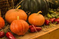 Autumn Pumpkin Thanksgiving Background - orange pumpor över rostig bakgrund royaltyfria foton
