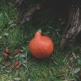 Autumn Pumpkin Thanksgiving Background - orange pumpor Royaltyfri Fotografi