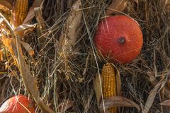 Autumn Pumpkin Thanksgiving Background - orange pumpor och gul havre arkivbilder