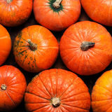 Autumn Pumpkin Thanksgiving Background - potirons oranges au-dessus d'OE Photographie stock libre de droits